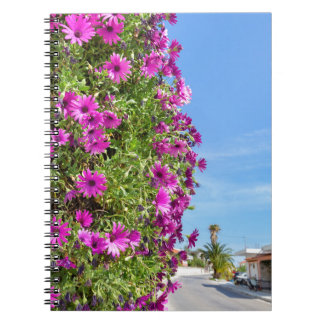 Hanging pink spanish daisies on wall near street notebooks