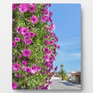 Hanging pink spanish daisies on wall near street plaque