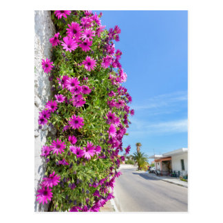 Hanging pink spanish daisies on wall near street postcard