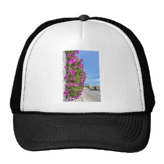 Hanging pink spanish daisies on wall near street trucker hat