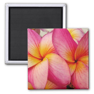 Hanna Pink Glow Plumeria Magnet