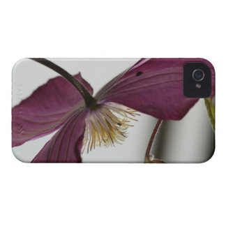 Hanycase Krea Clematis iPhone 4 Case-Mate Cases