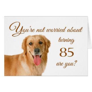 Happy 85th birthday, worried lab card