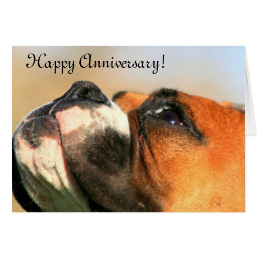 Happy anniversary boxer dog greeting card zazzle