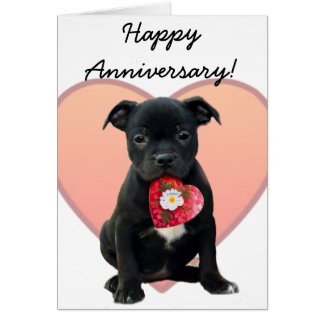 Happy Anniversary staffordshire bull terrier card