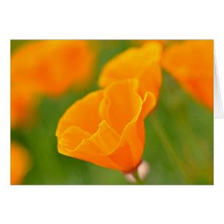 Happy August Birthday Orange Poppy Close Up Macro Card