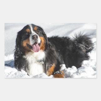 Happy Bernese Mountain Dog In Winter Snow