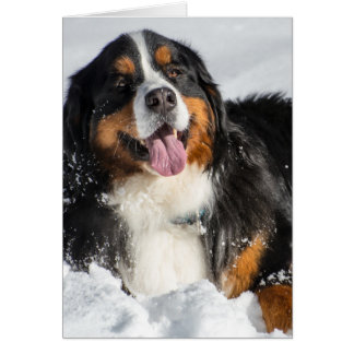 Happy Bernese Mountain Dog In Winter Snow Card