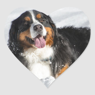 Happy Bernese Mountain Dog In Winter Snow Heart Sticker