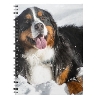 Happy Bernese Mountain Dog In Winter Snow Notebook