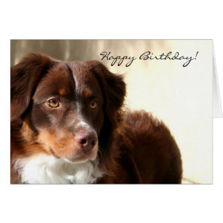 Happy Birthday Australian Shepherd greeting card