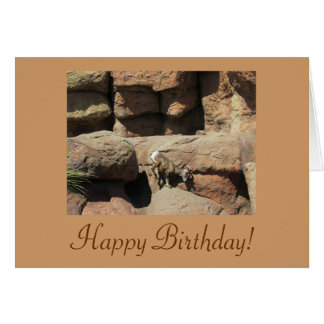 Happy Birthday Bighorn Sheep Card