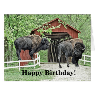 Happy Birthday Bison Bull At The Covered Bridge Card