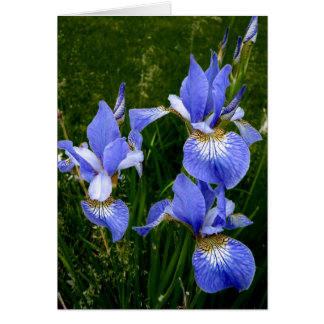 Happy Birthday - Blue Iris-Dark Card