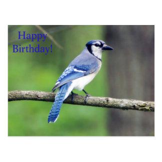 Happy Birthday Blue Jay Postcard