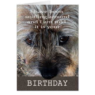 Happy Birthday, Border terrier sniffing around. Card