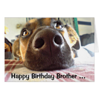 Happy Birthday Brother One I look up to! Cute Dog Card