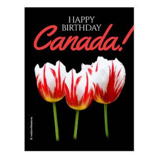 Happy Birthday Canada Day Maple Leaf Tulips Postcard