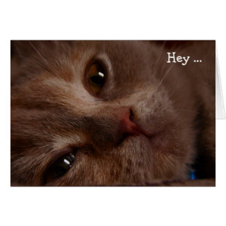Happy Birthday Card: Cat's Face Card