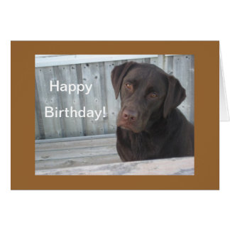 Happy Birthday Card - Chocolate Lab