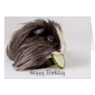 Happy Birthday card cute guinea pig eating