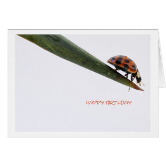 Happy Birthday Card Ladybird
