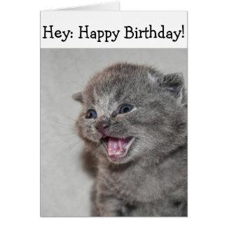 Happy Birthday Card: Surprised grey Kitten Card