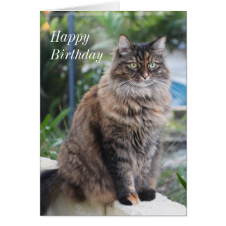Happy Birthday. Card with beautiful cat picture.