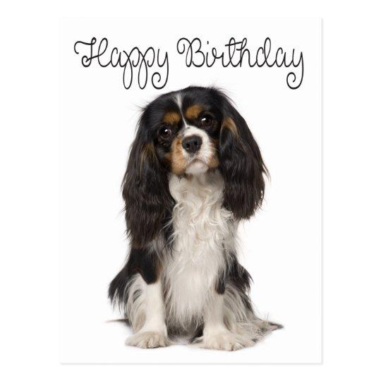 [Image: happy_birthday_cavalier_king_charles_spa...vr_540.jpg]