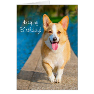 Happy Birthday Corgi Dog Card