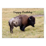 Happy Birthday, Dusty Bison Bull Humor Greeting Cards