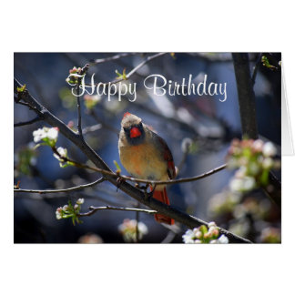 Happy Birthday Female Cardinal in Flowering Tree Card