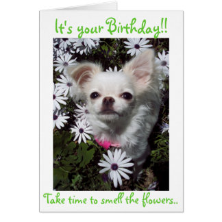Happy Birthday for Dogs Card