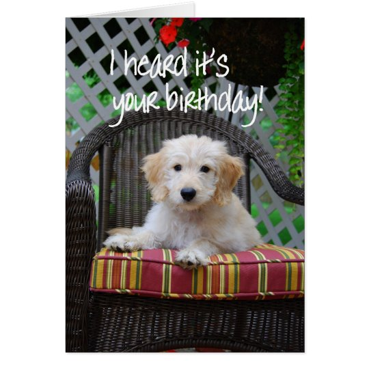 Happy Birthday Golden Doodle Puppy Card