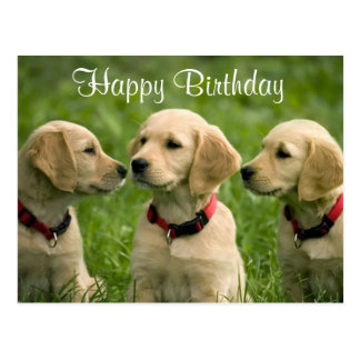 Happy Birthday Golden Retriever Puppies Postcard