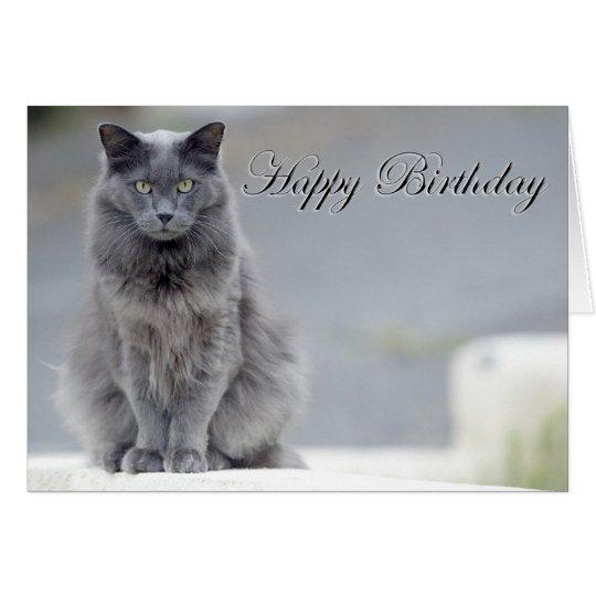 happy birthday grey cat card  zazzleca