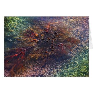 Happy Birthday - Kelp Card