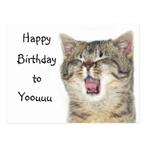 Happy Birthday kitten Postcards