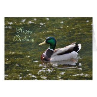 Happy Birthday Mallard Duck Card by Janz