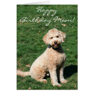 Happy Birthday Mom Mini Goldendoodle greeting card