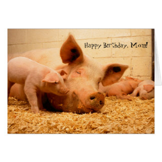 Happy Birthday Mom Mother Pig and Piglets Card