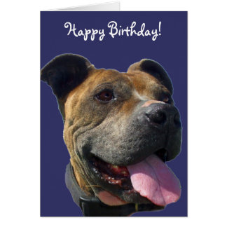 Happy Birthday Pitbull greeting card