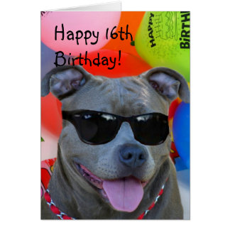 Happy Birthday Pitbull greeting card
