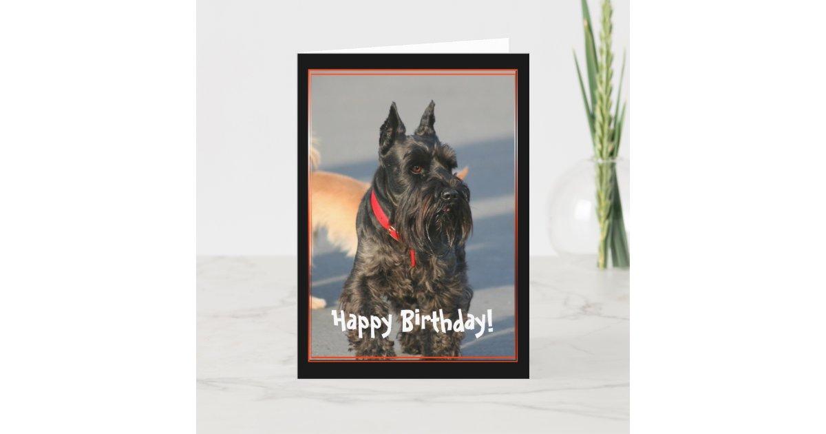 Happy birthday scottish terrier greeting card zazzle m4hsunfo