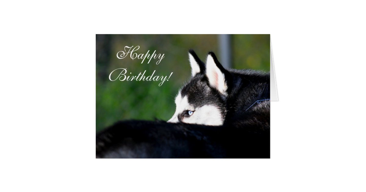 Happy Birthday Siberian Husky Greeting Card Zazzle Ca