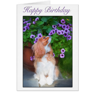 Happy Birthday Smelling Flowers King Charles Dog Card