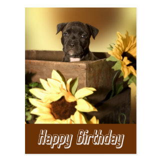 Happy Birthday Staffordshire Terrier Dog Post Card