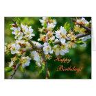 Happy Birthday - Sun-Dappled Spring Hawthorn Card