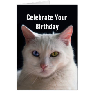 Happy Birthday Turkish Angora Cat Card