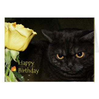 Happy Birthday - Venezia Cat Greeting card